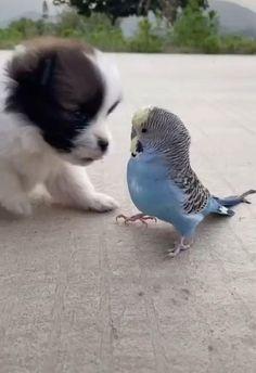 Cute Animal Photos, Cute Animal Videos, Funny Animal Pictures, Cute Funny Dogs, Cute Funny Animals, Cute Cats, Cute Dogs And Puppies, Baby Dogs, Animal Antics