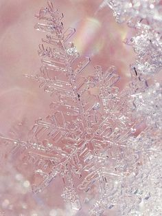"falling-from-a-star: "" snow crystal by rokkosan kobe japan on Flickr. """