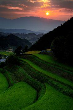 棚田のある風景 奈良県明日香村 Terraced rice paddies in Asuka, Nara, Japan
