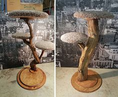 Here are some very unique cat trees handcrafted by The Happiest Cat in Portland, Oregon using real tree trunks. No two are the same and they look like something cats would love. Generous carpeted platforms arestrategically placed on the tree branches to create climbing and perching nirvana. If you're looking for something completely unique for…