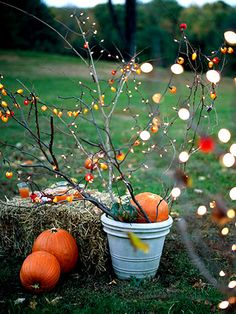 Festive Harvest Tree  Adapt Christmas lights for the Halloween and Thanksgiving season. Position sturdy bare branches in a pot half filled with small rocks or potting soil. Fill in the top of the pot with gourds and pumpkins. Wrap strands of lights (white lights or specialty outdoor party lights) around the bare branches.