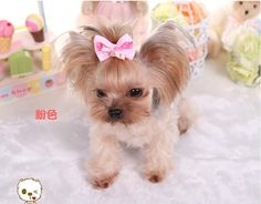 Type: Dogs Material: Metal Item Type: Bow Length: 5-6cm