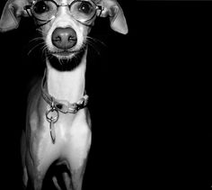 glasses make you look smarter. that's fact.