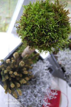 Sammalpalloja ja -puita ohjeen kera blogissa How To Dry Basil, Herbs, Herb