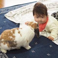 まこもの鼻ツンにいつも変な顔する娘 うさぎたちはいつもケージから出してすぐに娘に鼻ツンして挨拶する ・ ・ ・ ・ ・  #赤ちゃん #ベビー #かわいい #肉 #女の子 #生後7ヶ月#0歳 #baby #babygirl #cute #育児 #子育て#babystagram #子供 #うさぎ #ロップイヤー #rabbit #rabbitstagram #bunny #ペット #bunbun #bun #pet #pets #petstagram #petsofinstagram #bunnies #bunnystagram #bunnylove #bunniesofinstagram