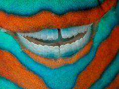 What amazing teeth you have :) Parrotfish teeth, Great Barrier Reef - Photograph by David Doubilet, National Geographic #fish #greatbarrierreef