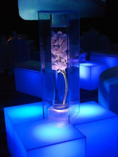 Orchid inside vase with acrylic box over it- LOVE!