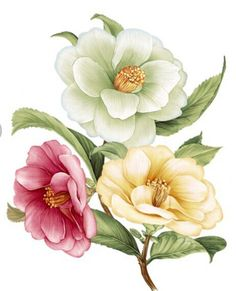 Botanical Flowers, Flowers Nature, Victorian Flowers, Vintage Flowers, Images Lindas, Flower Art Images, Flower Sketches, Watercolor Projects, Beautiful Flowers Wallpapers