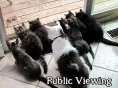 Public Viewing for cats