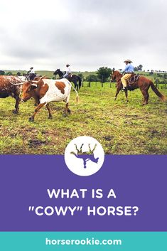 """Whether you're an English rider trying to brush up on Western terminology or an """"Horse Rookie"""" trying to decipher phrases you've heard tossed around, we can help. Horseback Riding Tips, Horse Facts, Western World, Tossed, Equestrian, Westerns, English, Horse Stuff, Group"""