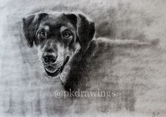 """,,Sindy"""" So, my dog finally has her own portrait. :)  Artwork by Patrícia Kleinová 80x60cm charcoal with wrapping paper 2016  @pkdrawings"""