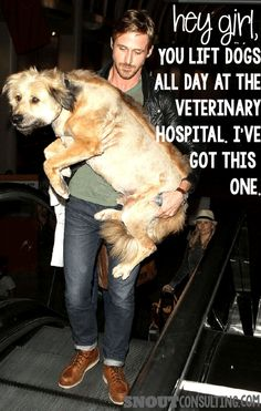 Ryan Gosling gets it - you're a veterinarian or vet tech that lifts big dogs all day. He's got this one. www.snoutconsulting.com #vettech