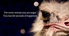 Quote: wees niet boos, zonde van de gelukkig-zijn-tijd.