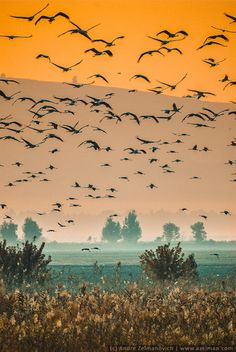 Birds in flight over the Hula Valley. https://500px.com/photo/58395898/hula-valley-by-andre-zelmanovich?ctx_page=1&from=user&user_id=3001