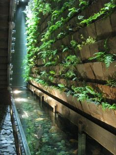 Gallery of Living Walls - Habitat Horticulture