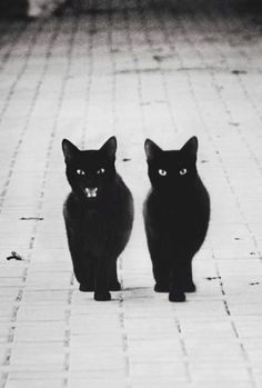 chats noirs                                                                                                                                                      Plus