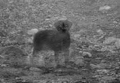 animal ghosts - Google Search
