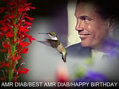 AMR DIAB BIRTHDAY DESIGN PHOTO