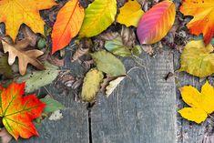 Der Herbst ist da. Und mit ihm das in der traditionellen chinesischen Medizin (TCM) zugeordnete Element Metall. Es symbolisiert alles, was konzentriert und fest ist, sowie Struktur und Form hat – in ihm befindet sich, was von unserer Erde noch Qualität und Wert besitzt. Im Herbst ist es für uns schlicht Zeit, um loszulassen. Ich wünsche auch dir einen farbenfrohen Herbst. Herzlich Sari Schneider Sari, Plants, Traditional Chinese Medicine, Autumn, Metal, Cordial, Saree, Plant, Saris