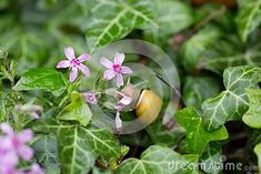 Small yellow snail on a pink flower having dinner after a rainy day in spring Snail, Pink Flowers, Dinner, Yellow, Spring, Day, Plants, Dining, Food Dinners