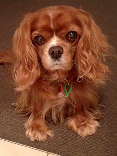 Chico ♥ Chico is just precious! I still miss my beautiful BELLA !