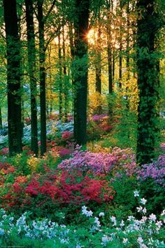 A Feast of Colour - Spring Flowers in the Forest. This looks like something from a fairy tale.