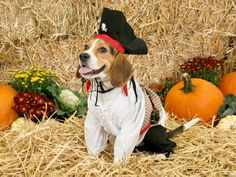 Dog Portrait Photography Tips in 40 Party Costume Designs