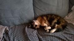 Sleepy