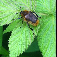 My garden bug