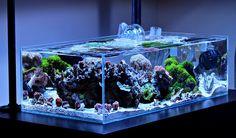 Shallow reef aquarium