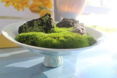Moss on porcelain plate.by Grancy Fu.