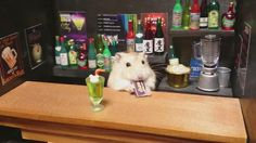 Adorable Hamster Bartenders Serving Tiny Food and Drinks - My Modern Met