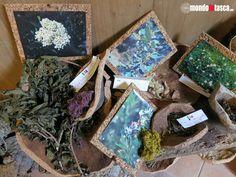 Erbe aromatiche utilizzate per colorare la #lana da tessere conservate al museo etnografico di #Aggius