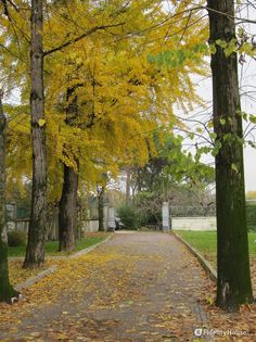 L'autunno ha bussato alle nostre porte e pian piano fa mostra dei suoi bei colori. Io penso sempre che sotto ogni foglia che cade, già si nasconda una nuova gemma