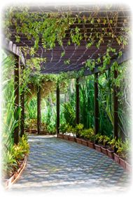 Arbor with vines over stone walkway