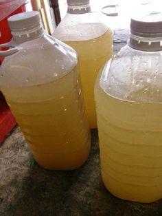 Aprenda a fazer a refrescante gasosa de gengibre | Cura pela Natureza.com.br
