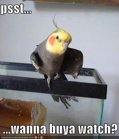 Google Image Result for http://icanhascheezburger.files.wordpress.com/2008/09/funny-pictures-sleazy-bird-asks-if-you-would-like-to-buy-a-watch.jpg
