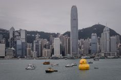 Rubber Duck The 16.5-metre-tall inflatable Rubber Duck art installation is seen at the Victoria Harbour in Hong Kong on May 2, 2013. The inflatable duck by Dutch artist Florentijn Hofman will be on display in the former British colony until June 9. (PHILIPPE LOPEZ/AFP/Getty Images)