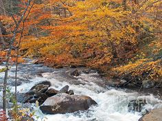 A River in Autumn by Sabrina K. Wheeler  River water tumbles over land and rocks in the late afternoon of a beautiful autumn day in Gatlinburg, Tennessee.  That large rock to the left center actually had enough room for 6 or more people to stand!  You can almost hear the rushing water roaring along . . . Available as a print, canvas, card, throw pillow, tote bag, shower curtain, and phone case!
