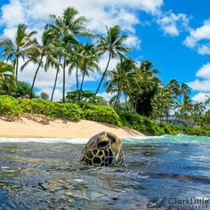 Clark Little Photography - Hawaii Cute Funny Animals, Cute Baby Animals, Animals And Pets, Cute Dogs, Ocean Creatures, Cute Creatures, Clark Little Photography, Voyager Loin, Fitness Motivation