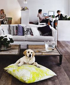 wide floor boards - and dog bed