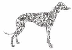 Greyhound doodle   greyhound doodle ink on bristol board   kelly bevan   Flickr