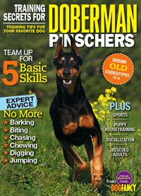 Use these expert tips and techniques to train your Doberman Pinscher.