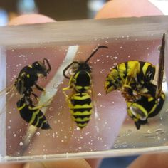 How to Encapsulate Insects in Resin Insecten in Epoxy Diy Resin Crafts, Jewelry Crafts, Fun Crafts, Diy And Crafts, Arts And Crafts, Resin Jewlery, Resin Jewelry Making, Gold Jewellery, Resin Tutorial