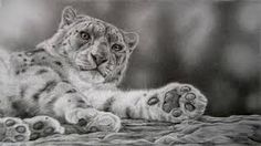 Image result for animal pencil art pictures