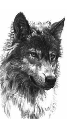 Check our website for amazing wolf tattoo designs and other tattoo ideas. Wolf Tattoo Design, Tattoo Design Drawings, Tattoo Designs, Tattoo Wolf, Tribal Wolf Tattoos, Tattoo Ideas, Bird Tattoos, Lobo Tribal, Tattoo Near Me