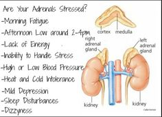 The Adrenal-Thyroid Connection - Dr. Kelly Simms, ND, Naturopathic Doctor Chicago
