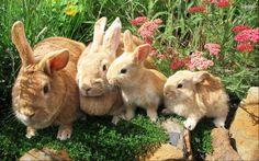 wabbit rabbit uploaded by ☁꓄ꃅꍟ ꌗꀘꌩ ꌗꍟ꒒꒒ꍟꋪ☁❦ on We Heart It Fluffy Animals, Baby Animals, Cute Animals, Nature Aesthetic, Aesthetic Green, Garden Animals, Animal Wallpaper, Beautiful Creatures, Savannah