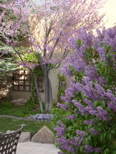 The power of purple in a Spring garden setting - lilacs, phlox and redbud