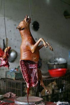 Stop the dog meat trade in China! Please sign: http://www.change.org/petitions/stop-horrific-dog-meat-trade-demand-china-make-animal-cruelty-laws?utm_source=supporter_message_medium=email (via Animal Liberation Worldwide on Facebook)